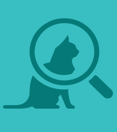 Blue cat magnifying glass icon