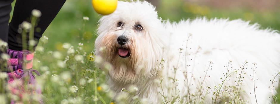 Корм для худеющих собак