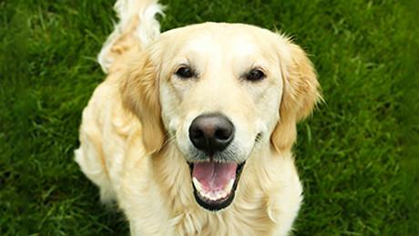 Количество корма для собак